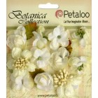 Petaloo - Botanica Collection - Botanica Minis - white